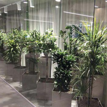 Озеленение в интерьере офиса