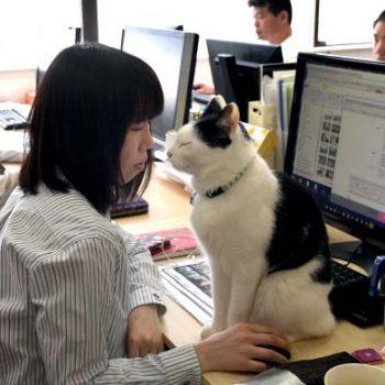 Японский офис: традиции и обычаи
