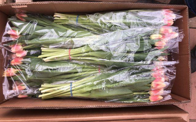 Тюльпаны оптом от агрофирмы